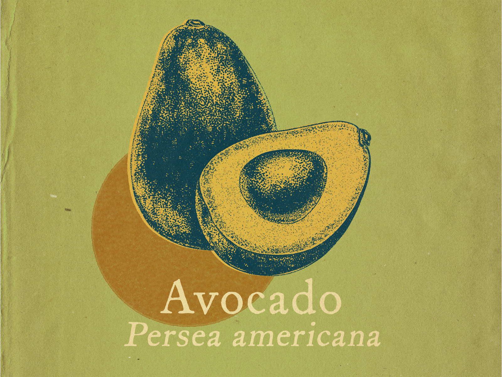 portfolio – botanicals – avocado