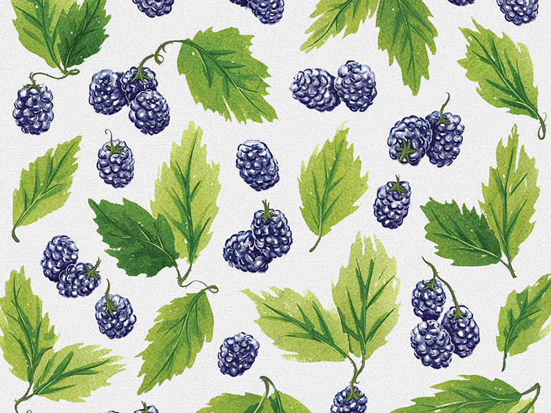 watercolor_blackberries